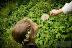 ALBA-WITH-DANDELION_BY_LAURA-FISHER.jpg