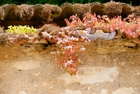 NOYERS-WALL-SUCCULENTS.jpg